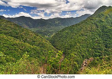 Puerto Rico jungle view