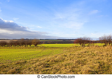 hawthorn hedgerow gap - a hawthorn hedgerow with a gap and...