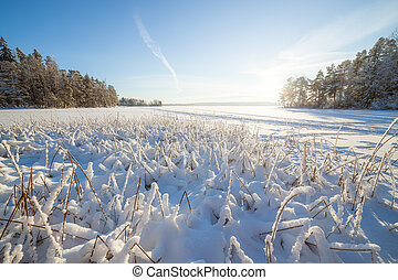Frozen lake and snow covered reeds at sunny winter day in...
