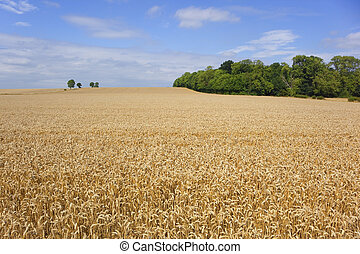 agricultural landscape - an agricultural landscape with...