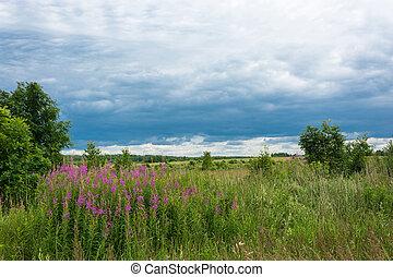 Summer landscape with Ivan-tea. - Summer landscape with...