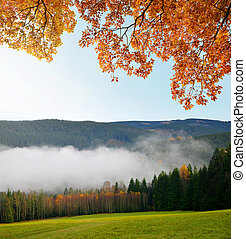 Morning haze in the National park Sumava, Czech Republic....