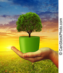 Hands holding tree in pot at sunset. Concept of...