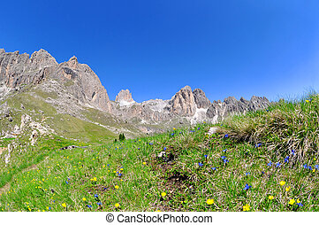 Valle del Vajolet in Dolomites,Italien Alps - Flowers on...