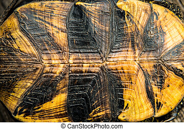Texture of turtle shell can be used for natural background
