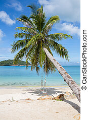 Beautiful tropical beach, palm tree and sea water in island...