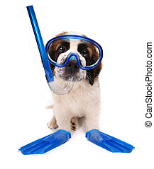 Puppy Wearing Snorkeling Gear on White Background - Funny...