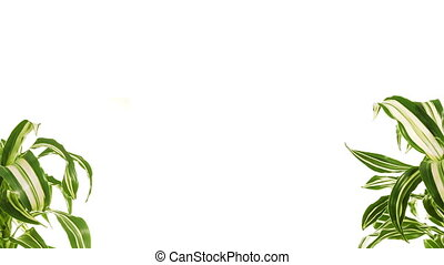 Two rotating plants with copy space between them. Isolated on white.