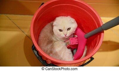 The kitten lies in bucket with a mop - The kitten lies in a...