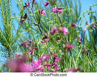 Willow-herb meadow Chamerion Angustifolium Fireweed Rosebay...