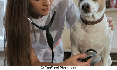 Female vet poses near the dog - Pretty female vet posing...