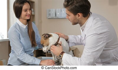 Male veterinarian queries woman about her pet - Male...