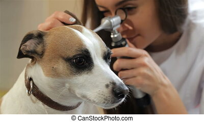 Female veterinarian looking through the special medical tool...