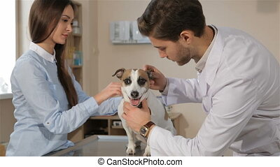 Male vet checks up the dog at the veterinarian clinic -...