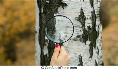 Woman with magnifying glass exploring a tree - Woman's hand...
