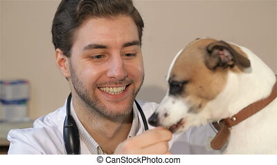 Male vet feeds the dog - Young male vet feeding the dog at...