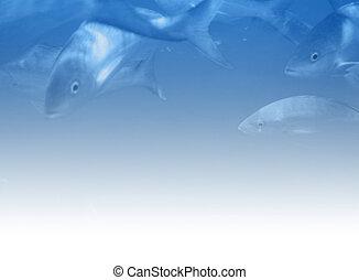 Underwater scene illustration - Soft, clean background,...