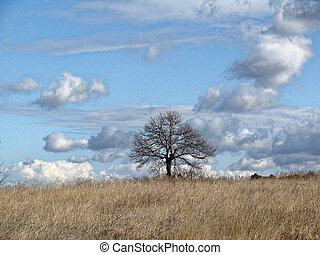 Lonely tree without leaves in late autumn in field. Infinite blue sky with clouds.