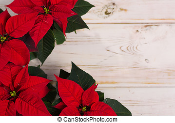 Red star Christmas flower poinsettia on rustic wooden background