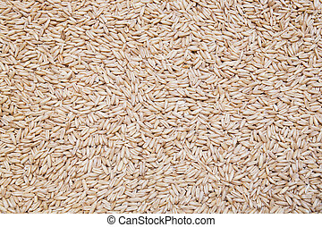 Oats background, texture - natural oat grains background,...
