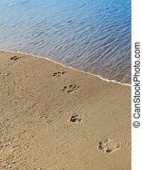 Dog footprints on the beach sand