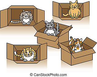 Cute Cats In Cartons - Five cute cats playing in cardboard...