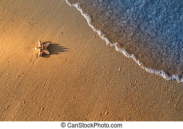 Starfish is lying on the wet sand at the beach