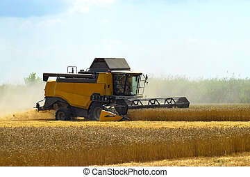 Kombain collects on the wheat crop. Agricultural machinery...