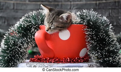 rotating the cup with sleepy kittens in the holiday decoration