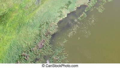 Flying over the river bank with reeds and tall grass -...
