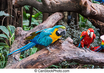 Papagáj, színpompás, Sügér, madár, ülés