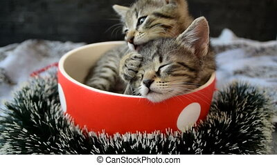 kittens lick and play in a cup