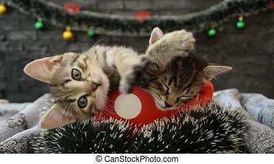 Kittens in a red dotted cup,with New Year decoration