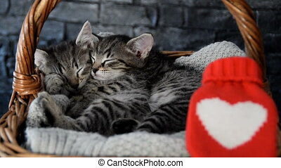 two lovely kittens sleeping in a wicker basket