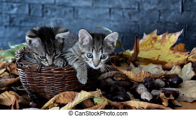 Kittens are sniffing and investigating