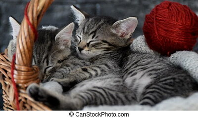 cuddled kittens in a wooden basket