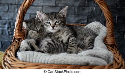 two adorable kittens sleeping in a wicker basket