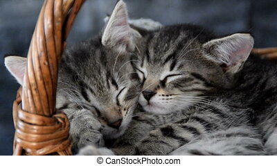 two kittens sleeping in a wicker basket