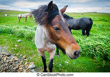 Painted horse comes up close to camera. Lush green field of...