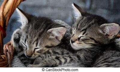 two adorable kittens sleeping in a wicker basket