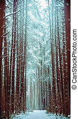 Footpath In A Snowy Coniferous Forest - Path in winter...