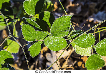 leaves at the earth in harmonic pattern - leaves at the...