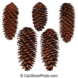 PineappleSpruce1 - Five pinecones from Spruces, picea abies