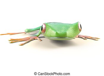 red eyed tree frog from tropical rainforest of Costa Rica isolated on white. Agalychnis callidrias. 3d illustration