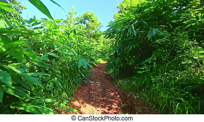 Camera Moves along Ground Path in Wild Tropical Forest -...