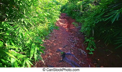 Camera Moves along Ground Path between Wild Plants in...