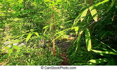 Camera Moves along Shady River Bank in Jungle - closeup...