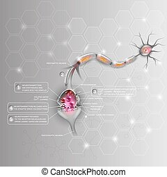 Synapse detailed anatomy, beautiful colorful illustration....