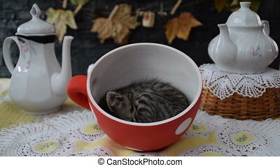 tea party with a kitten