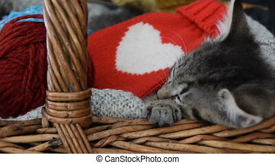 Gift for the person you love.Cute cat sleeping in a wicker...